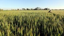 Baking Bad: Egypt's wheat problem exposes corruption