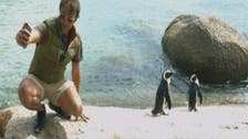 Al Arabiya in the breathtaking wildlife of Cape Town