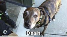 'Dash' or 'Daesh?' Dog sparks terrorism alert at American bank
