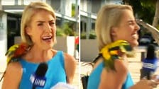 Australian reporter freaks out after escaped parrot lands on her