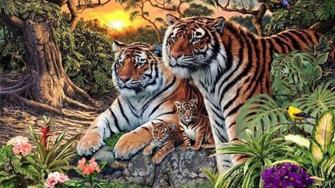 نمر رئيسية