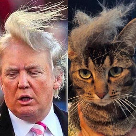 Trump Cat (Twitter)