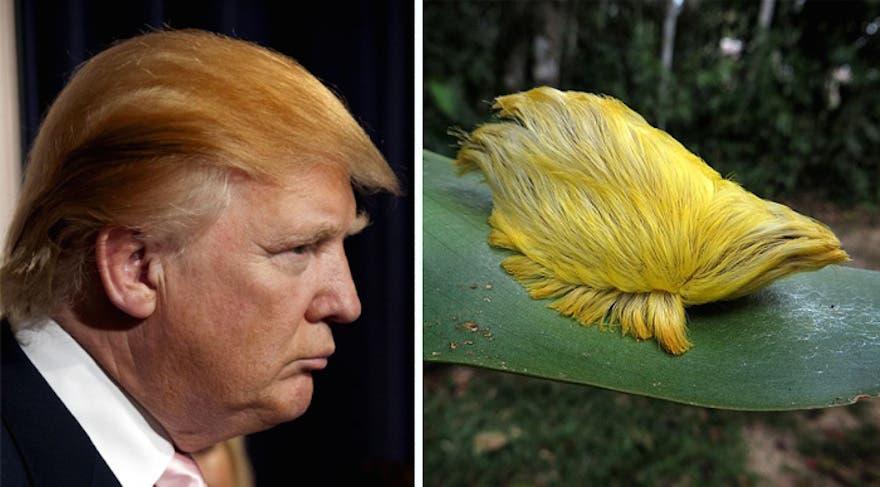 Trump Bug (Twitter)