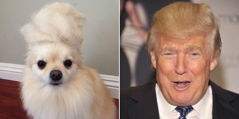 Trump Dog (Twitter)