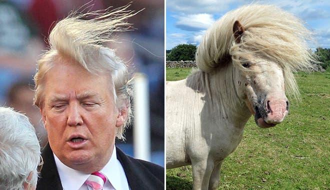 Trump Pony (Twitter)