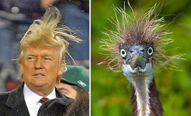 Trump Bird (Twitter)