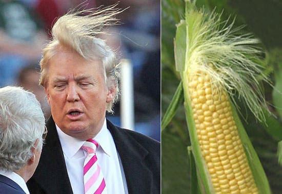 Trump Corn (Twitter)