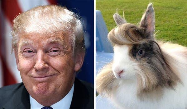 Trump Bunny (Twitter)