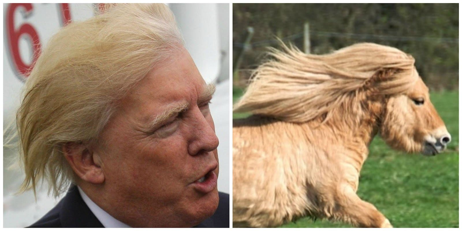 Trump Horse (Twitter)