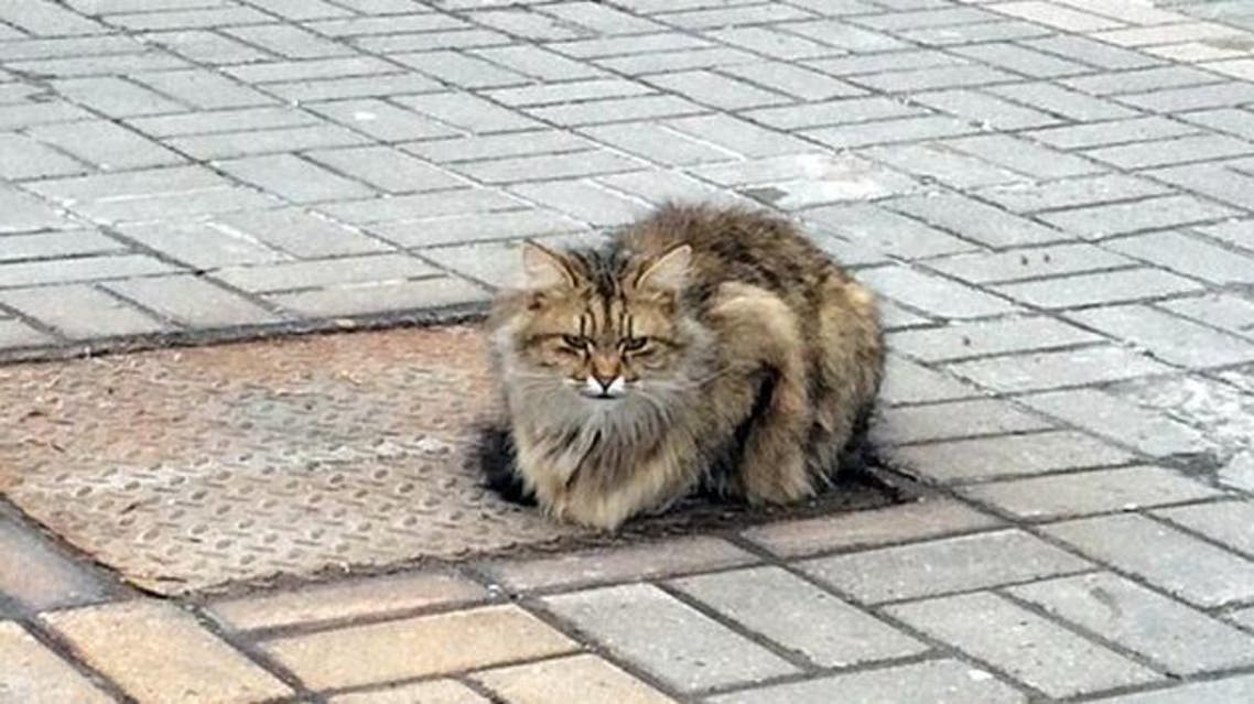 قطة وفية