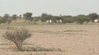 شاهد على إحدى أكبر المحميات الطبيعية في #السعودية