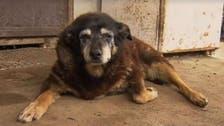 Maggie, world's 'oldest dog' dies at 30