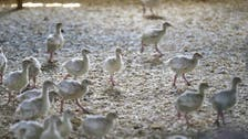 Iraq reports first outbreaks of bird flu in 10 years