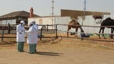"""السعودية.. """"كورونا"""" يغلق سوق الإبل بالجنادرية"""