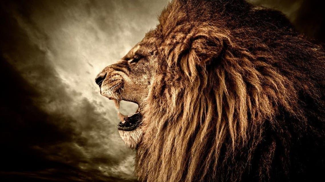 lion (shutterstock)