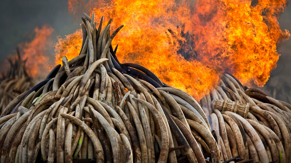 An ivory statue, right, lies on top of pyres of ivory as they are set on fire in Nairobi National Park, Kenya Saturday, April 30, 2016. (AP)