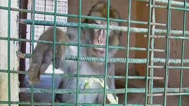 """مصري يحول منزله إلى """"حديقة حيوان"""" لكسب لقمة العيش"""