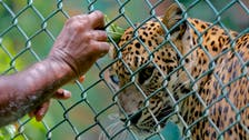 Leopards spark fear in China after escaping from safari park