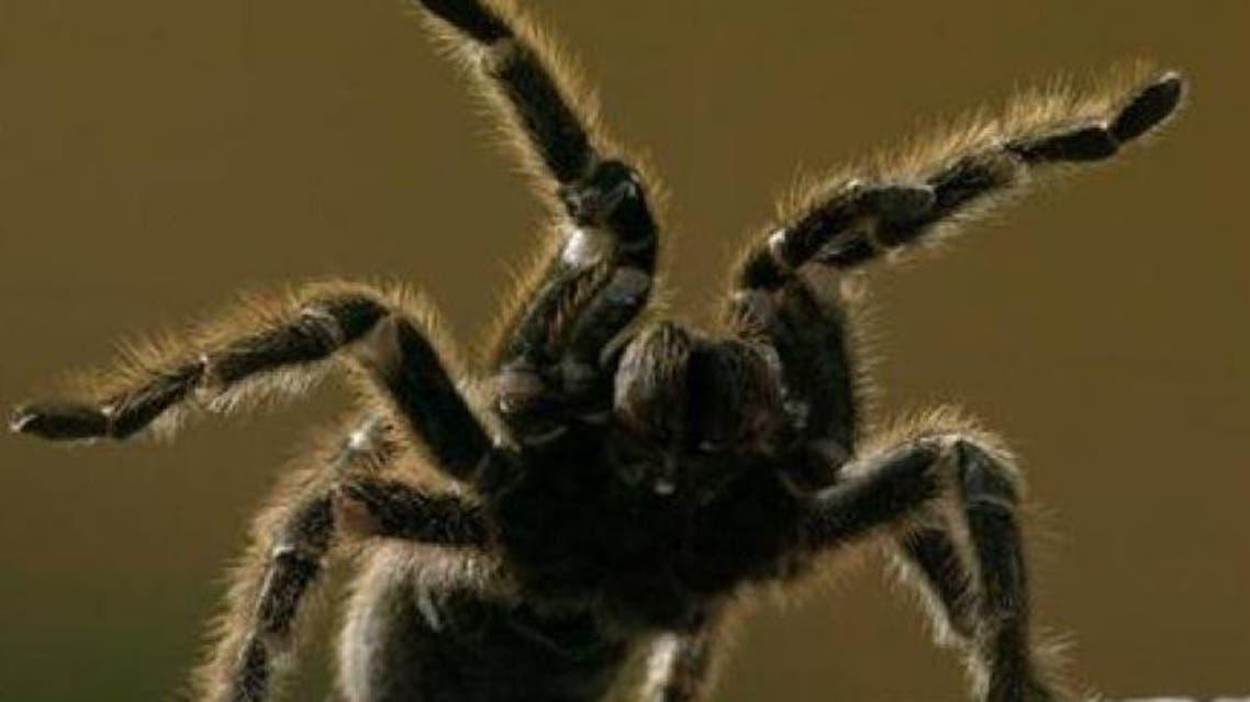 spider reuters