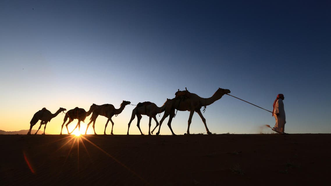 A Saudi man leads camels as he heads back home from a training center on April 1, 2016 near the city of Tabuk, located some 1500km northwest of the capital Riyadh. MOHAMED HWAITY / AFP