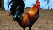 مرغ کی بانگ سے کوڑے، جیل اور جرمانہ کی سزاء