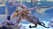 Savvy squid, octopuses on rise despite warming oceans