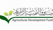 """""""التنمية الزراعية"""" السعودي يعتمد قروضا بـ 820 مليون ريال"""