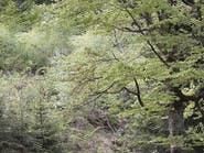 هل تستطيع تحديد مكان اختباء الدب في الصورة؟