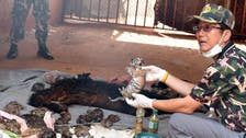 40 dead tiger cubs found in Thailand temple freezer