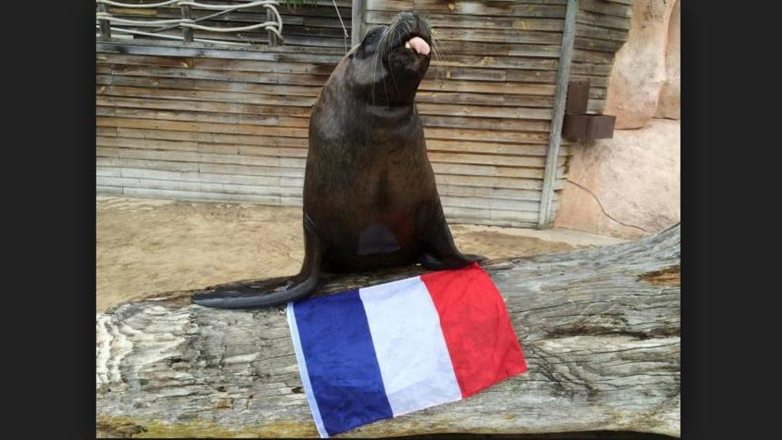 Watson the sea-lion poses with a French flag at the Amneville Zoo near Metz, France. (Reuters)