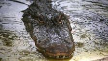 Boy killed by alligator mourned at Nebraska funeral