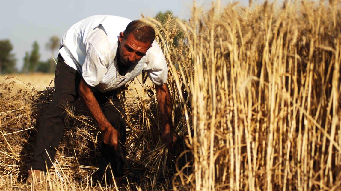 سوريا - قمح - زراعة