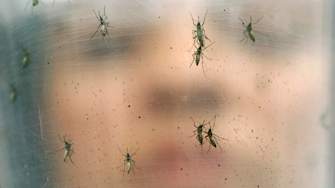 In this Jan. 18, 2016 file photo, a researcher holds a container of female Aedes aegypti mosquitoes at the Biomedical Sciences Institute at Sao Paulo University in Brazil. On Thursday, May 19, 2016, the U.N. health agency convened an expert committee to consider whether the epidemic of yellow fever, an acute viral hemorrhagic fever, qualifies as an international public health emergency. (AP Photo/Andre Penner, File)