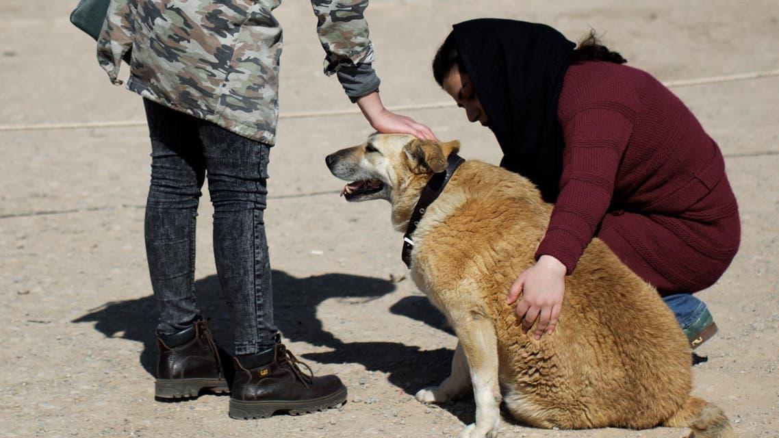 إيران كلاب كلب