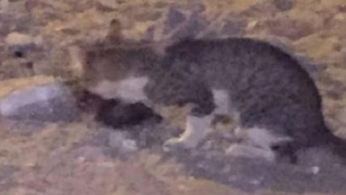 بلیاں،انسانی باقیات