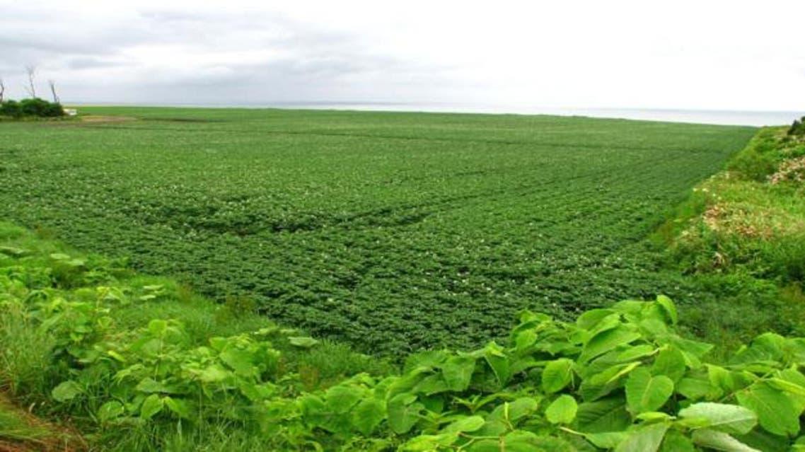 الزراعة في السودان