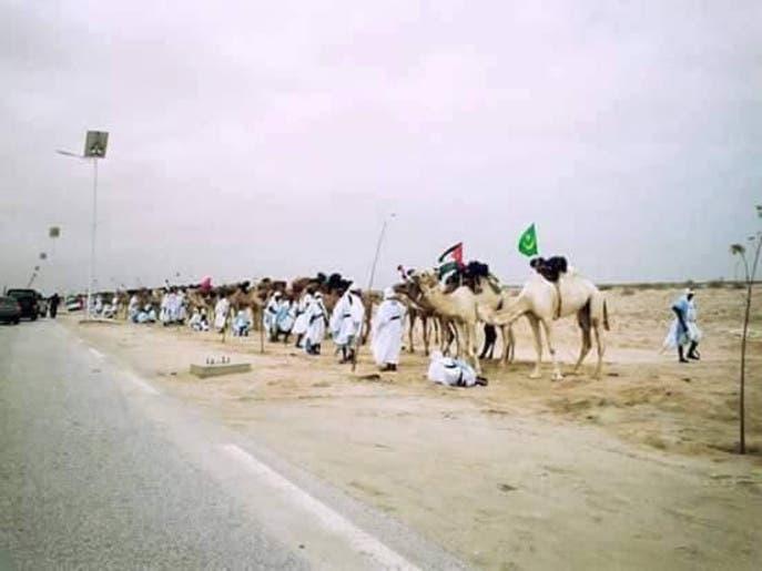 موريتانيا.. 1000 جمل تحمل الأعلام العربية