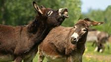 British 'donkey whisperer' translates 'ee-aws' using technology