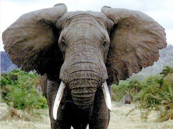 صورة تقتل صاحبها.. فيل يدهس معجباً