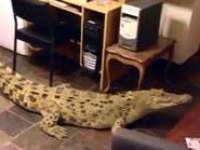 بالفيديو.. سيدة تربي تمساحا في بيتها