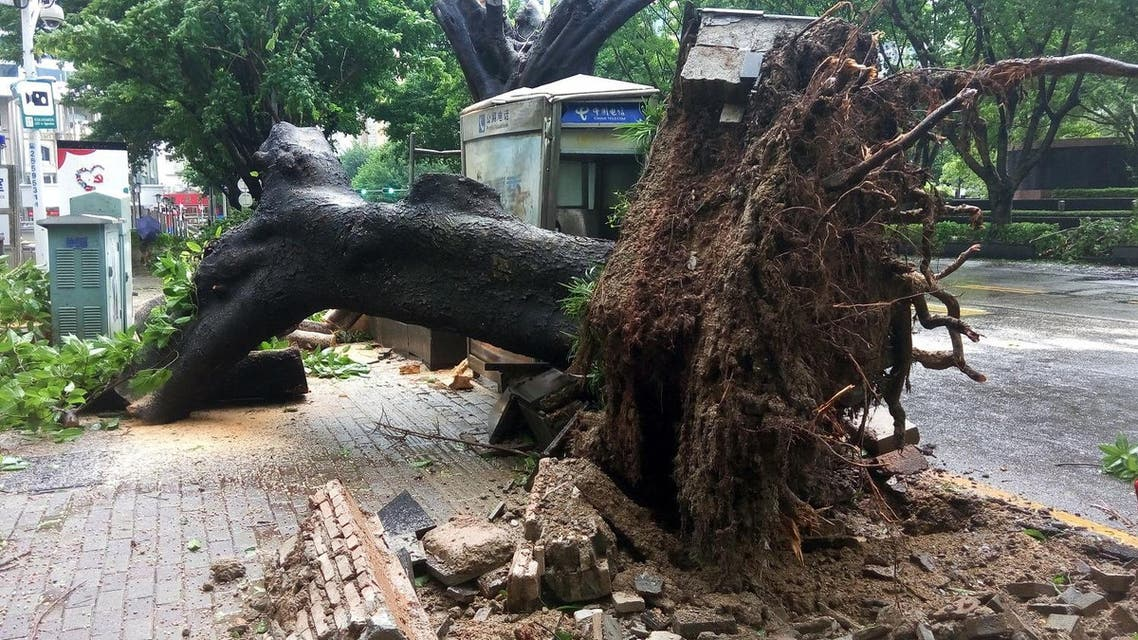 An uprooted tree in the aftermath of Typhoon Nida in the southern Chinese city of Shenzhen, in Guangdong province, on Aug. 2, 2016 (Photo: AFP)