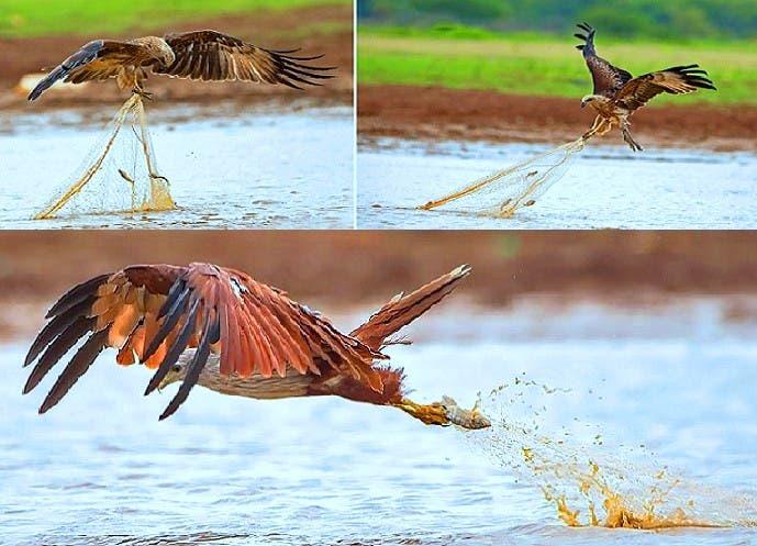 """الطائر الذي وصفه الرسول بـ""""فاسق"""""""
