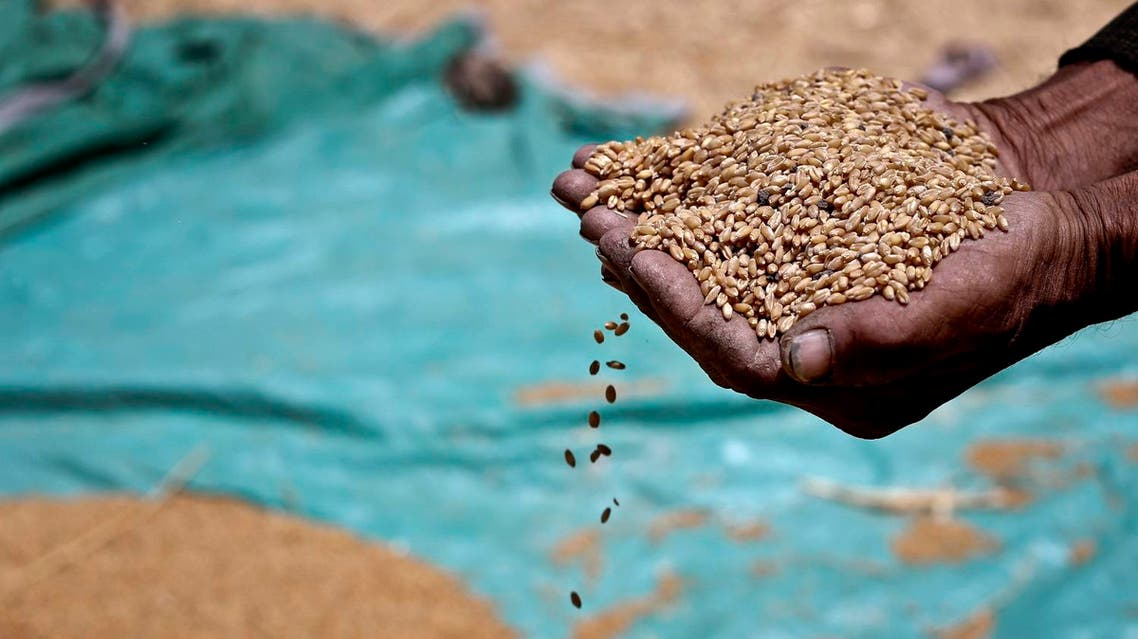 Farmer holds grains of wheat in a field in Fayoum, south of Cairo, Egypt AP