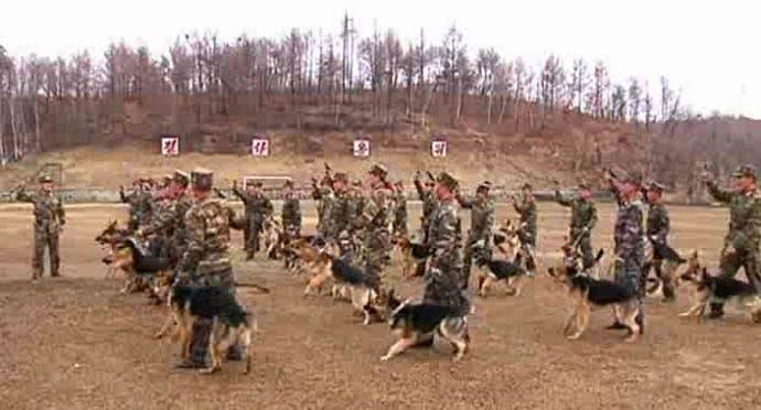 أما الكلاب البوليسية، فلحمها ممنوع، لأنها للاستخدام الأمني فقط، أو لنهش المحكومين بالاعدام