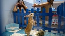 Hong Kong 'rabbit cafe' hops onto high street