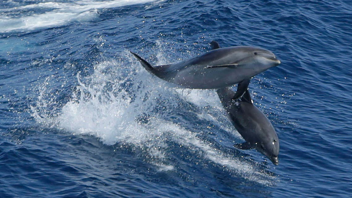 Dolphin reuters