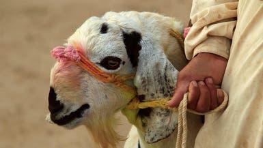 إذا كنت مصابا بهذه الأمراض فلا تقترب من لحوم العيد
