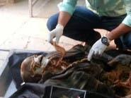 سر الهيكل العظمي الذي عُثر عليه في جزيرة تيران