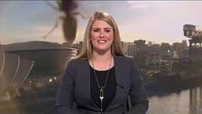 شاهد كيف حاول دبّور عملاق مهاجمة مذيعة أخبار على الهواء