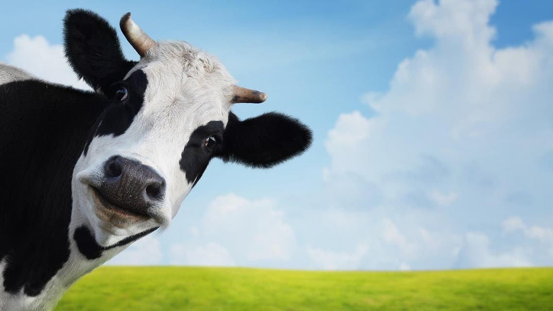 Emissions tied to dairy cows are to be monitored (File Photo: Shutterstock)
